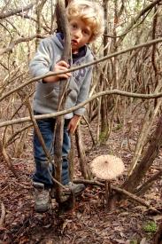what a puppola! ( parasol mushroom)